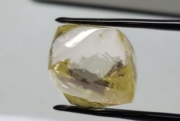 lucapa yellow-1